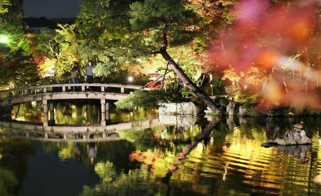 夜晚依舊絢麗奪目的紅葉勝地 京都‧永觀堂將舉行點燈活動