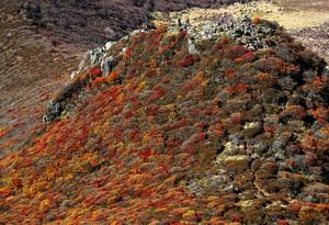 大分‧九重連山秋季美景正盛 紅葉較往年晚5天開始(影片)