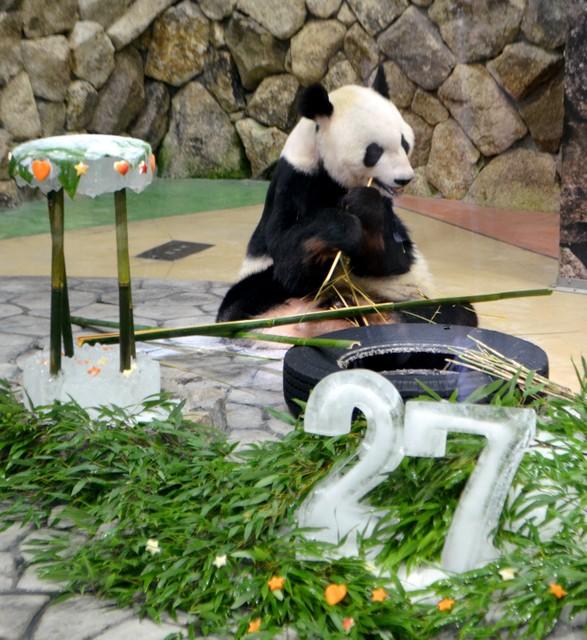 和歌山‧全球最高齡的貓熊爸爸 「永明」歡慶27歲生日