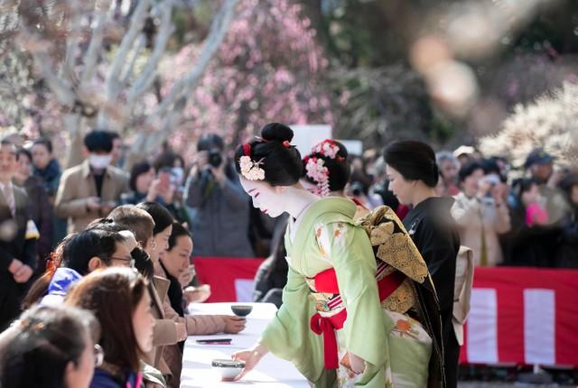 北野天滿宮梅苑對外開放 25日戶外茶會賞梅同時受藝舞妓款待