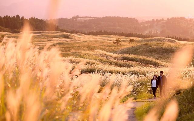 夕陽下閃耀的茜紅色秋季小徑 熊本‧阿蘇山芒草正值最佳賞期