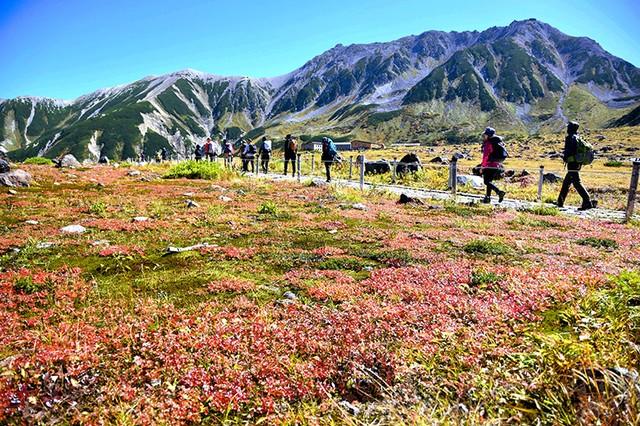 立山連峰換上紅黃秋裝 前往室堂平欣賞紅葉正是時候