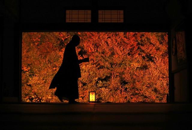 兵庫·紅色吊鐘花美景「宛如畫作」 2週吸引3萬名遊客造訪