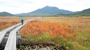 群馬·尾瀨地區健行享秋季美景 欣賞草紅葉正是時候(影片)
