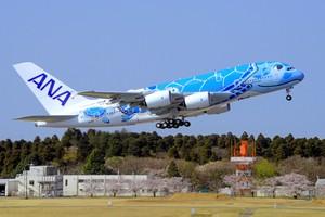 ANA「飛天海龜」起飛了! 全球最大客機5月啟航(影片)