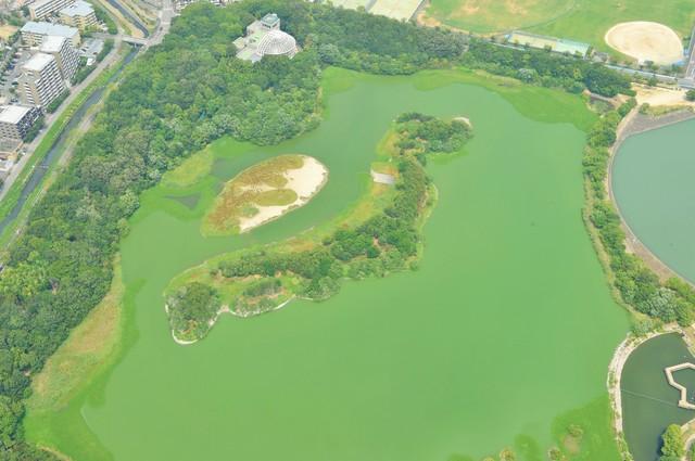 伊丹機場起飛2分鐘 俯瞰形似「日本列島」的謎之綠地