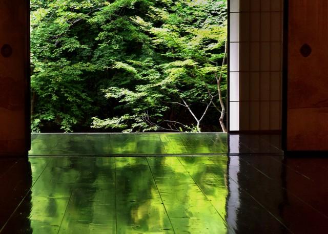 京都‧實相院楓樹迎新綠 倒映「綠地板」鮮艷景致