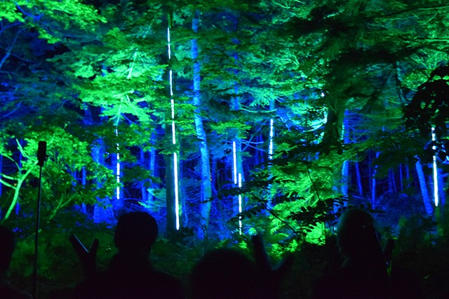 阿寒湖森林夜間光影藝術 KAMUY LUMINA夢幻體驗開跑