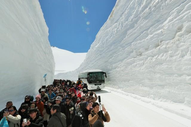 「漫步大雪谷」仰望雪壁 立山黑部阿爾卑斯路線開通首行