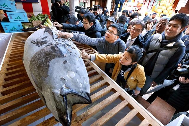 兵庫·西宮神社供奉巨大鮪魚 香油錢貼魚身象徵「錢財上身」