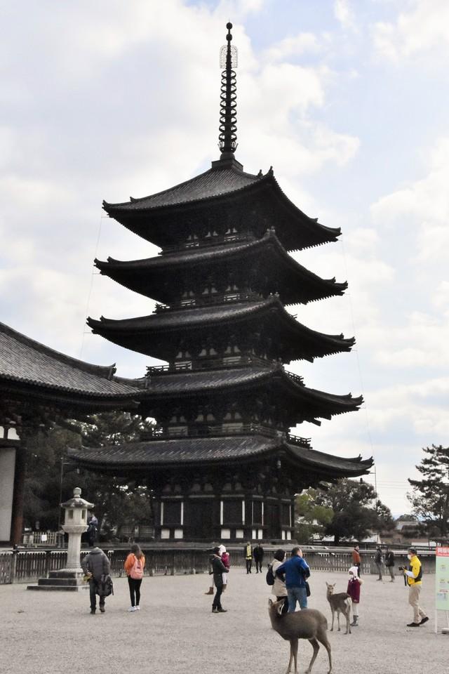 全國第2高的奈良興福寺五重塔 時隔120年將展開大規模修繕