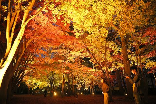 北海道‧函館正值紅葉最佳觀賞期 「香雪園」點燈夜晚現美景