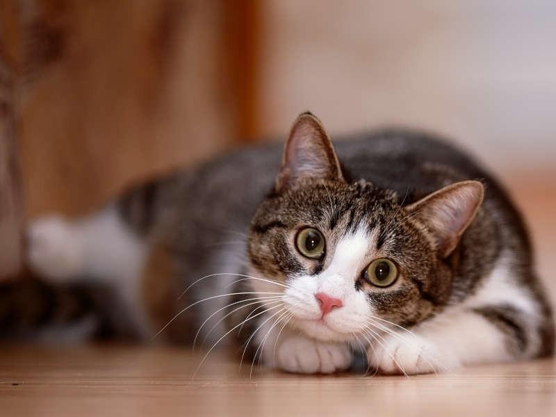 猫塾の画像 p1_7