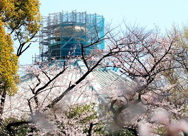 迎接2020東奧 日本武道館屋頂「洋蔥」換新裝