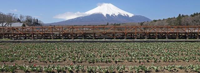 富士北麓人潮大幅減少 當地已發出共同宣言「謝絕來訪」