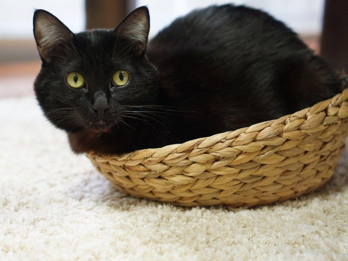 猫 布団の上 重い
