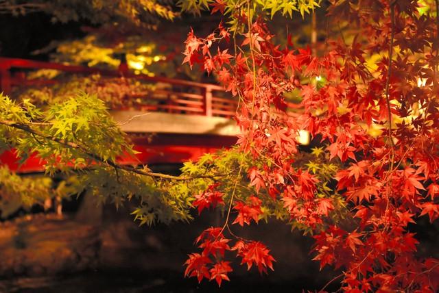 青森紅葉季節到來 繽紛色彩交織秋天景致