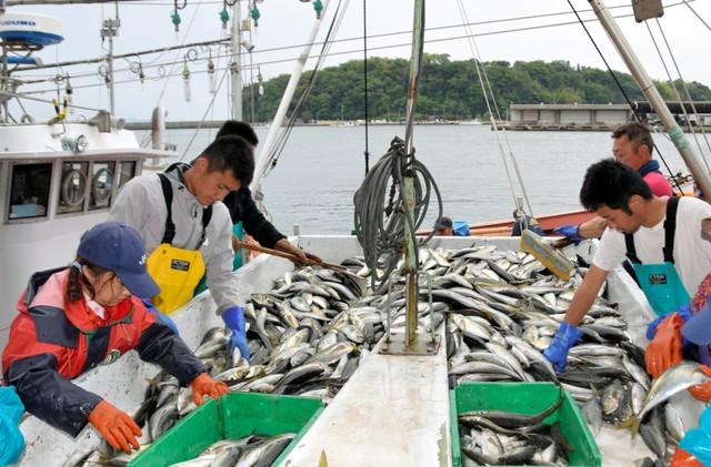 立志當漁夫! 選擇投身「大海」的都市年輕人們㊦