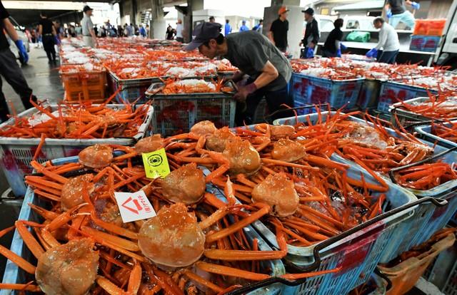 紅楚蟹今年首次競標 史上最高價1隻10萬日圓