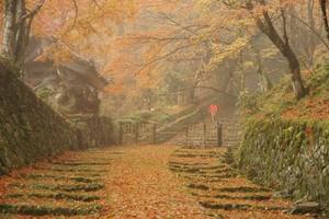滋賀·霧氣繚繞的晚秋之美 自古見證歷史的百濟寺(影片)