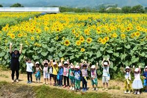10萬朵向日葵隨風搖曳 高知‧土佐金黃花海盛景(影片)