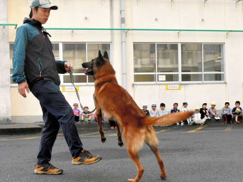 児童が見守る中、ドッグトレーナーの竹内聖博さんの指示通りに動く「すばる」