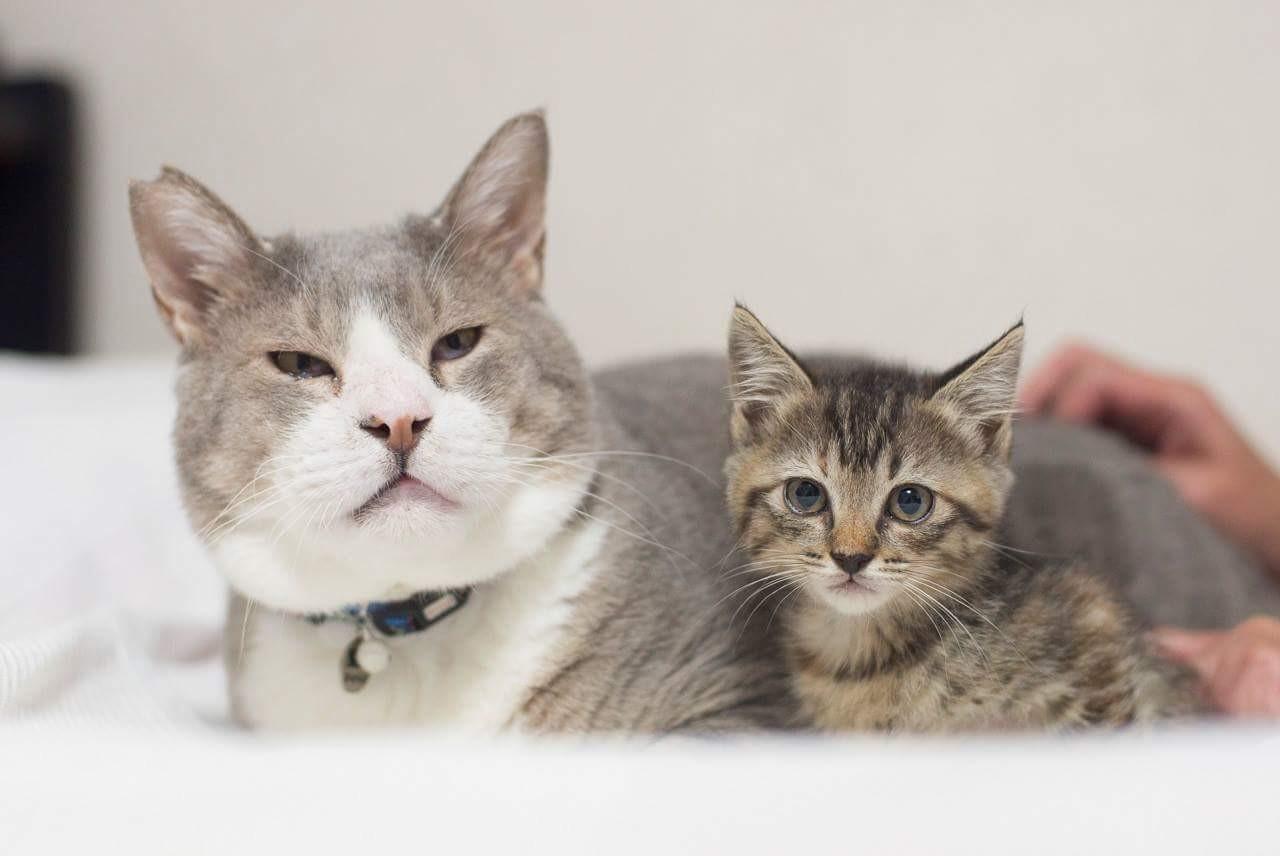 福島・飯館村で被災したボス猫のゴエモン 「猫に恩返しがしたい」人の元で大往生|まいどなニュース