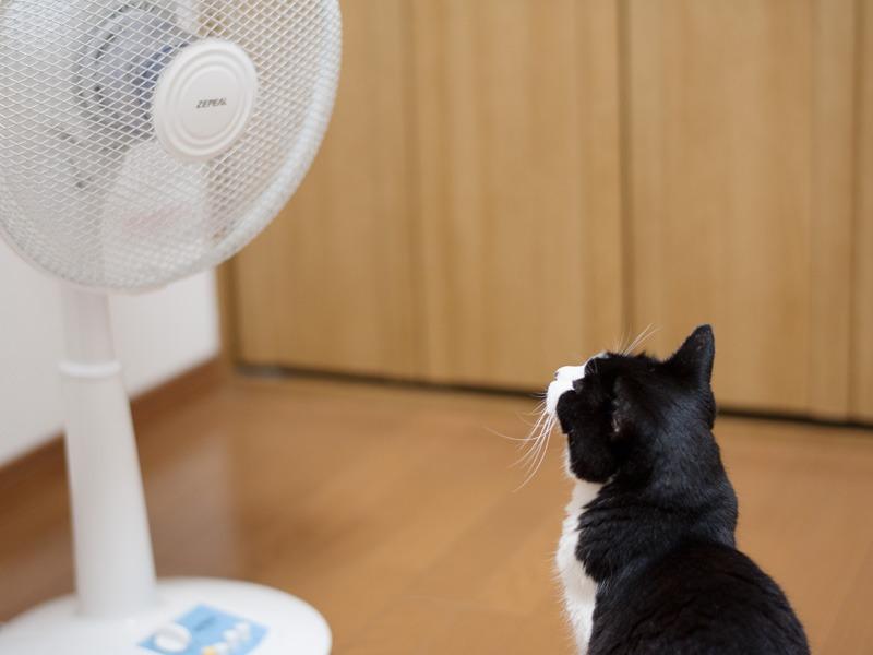 「この扇風機、どこのメーカーなの」(小林写函撮影)