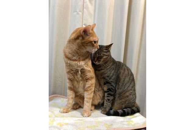 の 気持ち 野良猫 【画像でわかる!】猫の気持ちが現れる行動・しぐさ一覧!