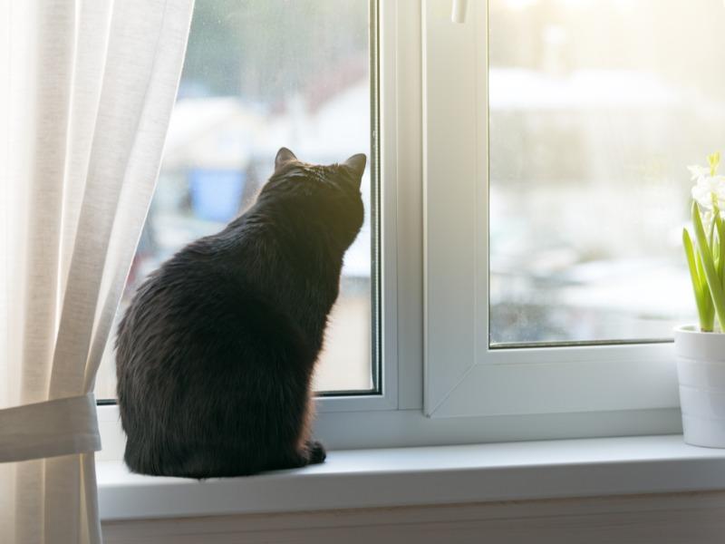 黒い毛が美しい猫