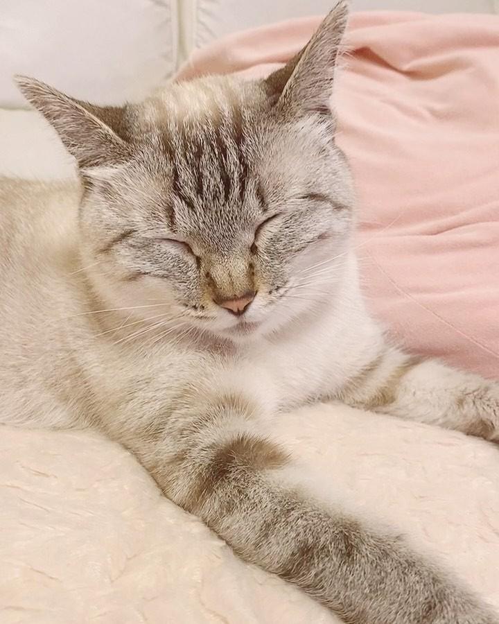 妻は犬派、夫は動物嫌いだが…長男のアニマルセラピーになればと猫探し 出会ったツンデレちゃんは家族を笑顔に|まいどなニュース