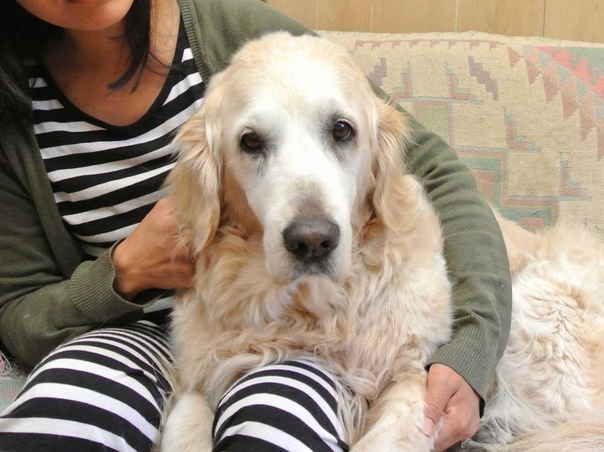 放置された犬を保護して飼育 3カ月後に返還要求、裁判に発展 | sippo(シッポ) |