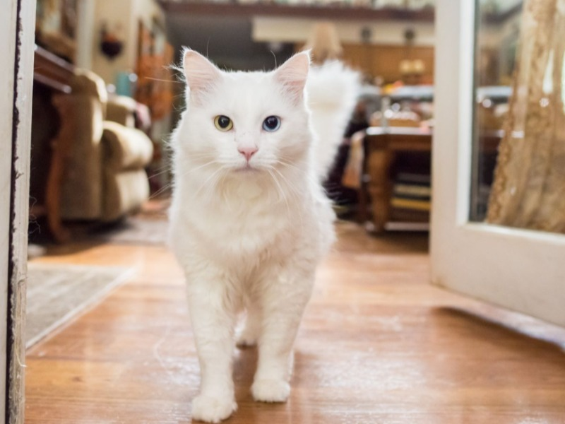 自然界で生き延びるために賢くなった?白猫