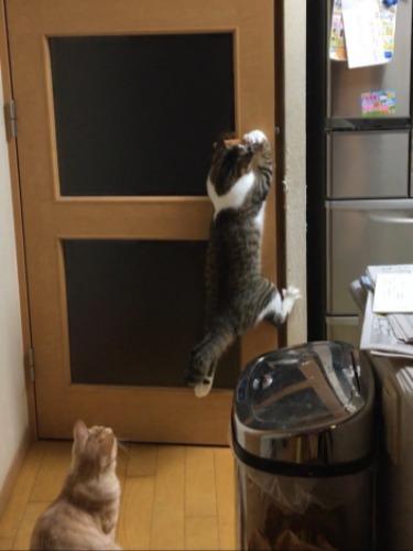 扉開け③右脚を壁に引っかけ…