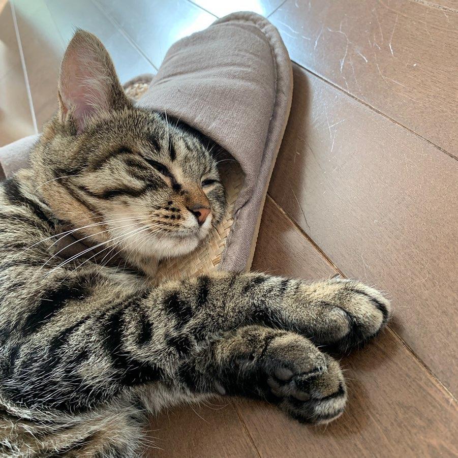 寝る で 猫 膝 の 上