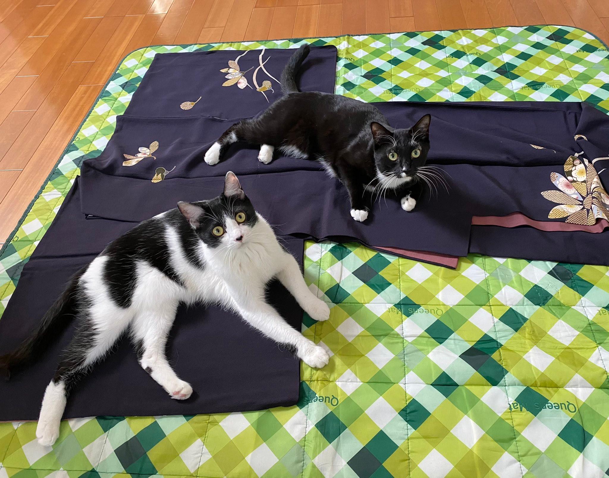 あや子 ツイッター 藤 藤あや子と2匹の子猫が戯れる動画が海外でも人気!「日本画のように美しい」保護猫の飼育にも称賛