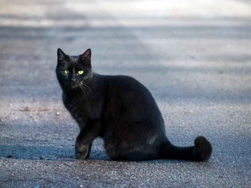 街中にいた黒猫