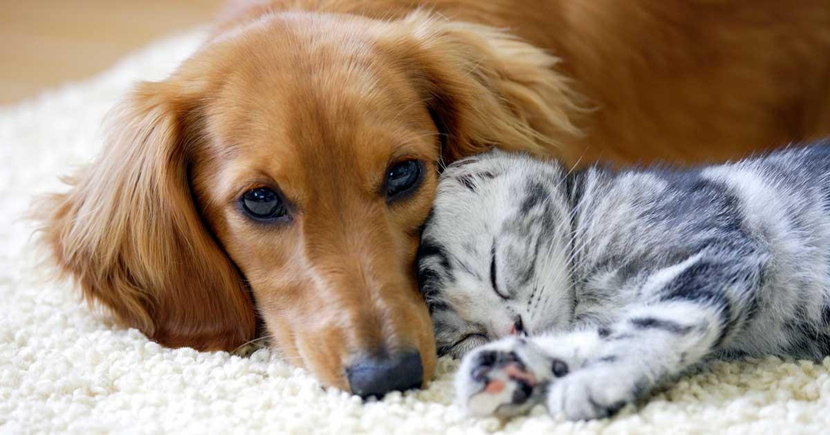 宮崎市議会、動物愛護議連を発足 犬猫との共生へ条例制定めざす | sippo(シッポ) |