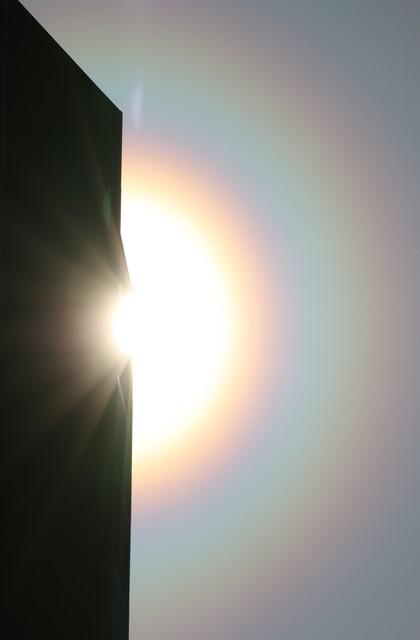 光環 花粉