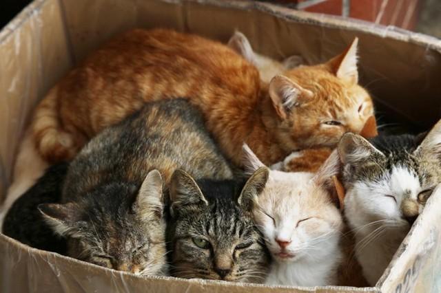 猫 の 多頭 飼い 猫の多頭飼い 喧嘩やトイレに注意!2匹以上飼うときの事前準備