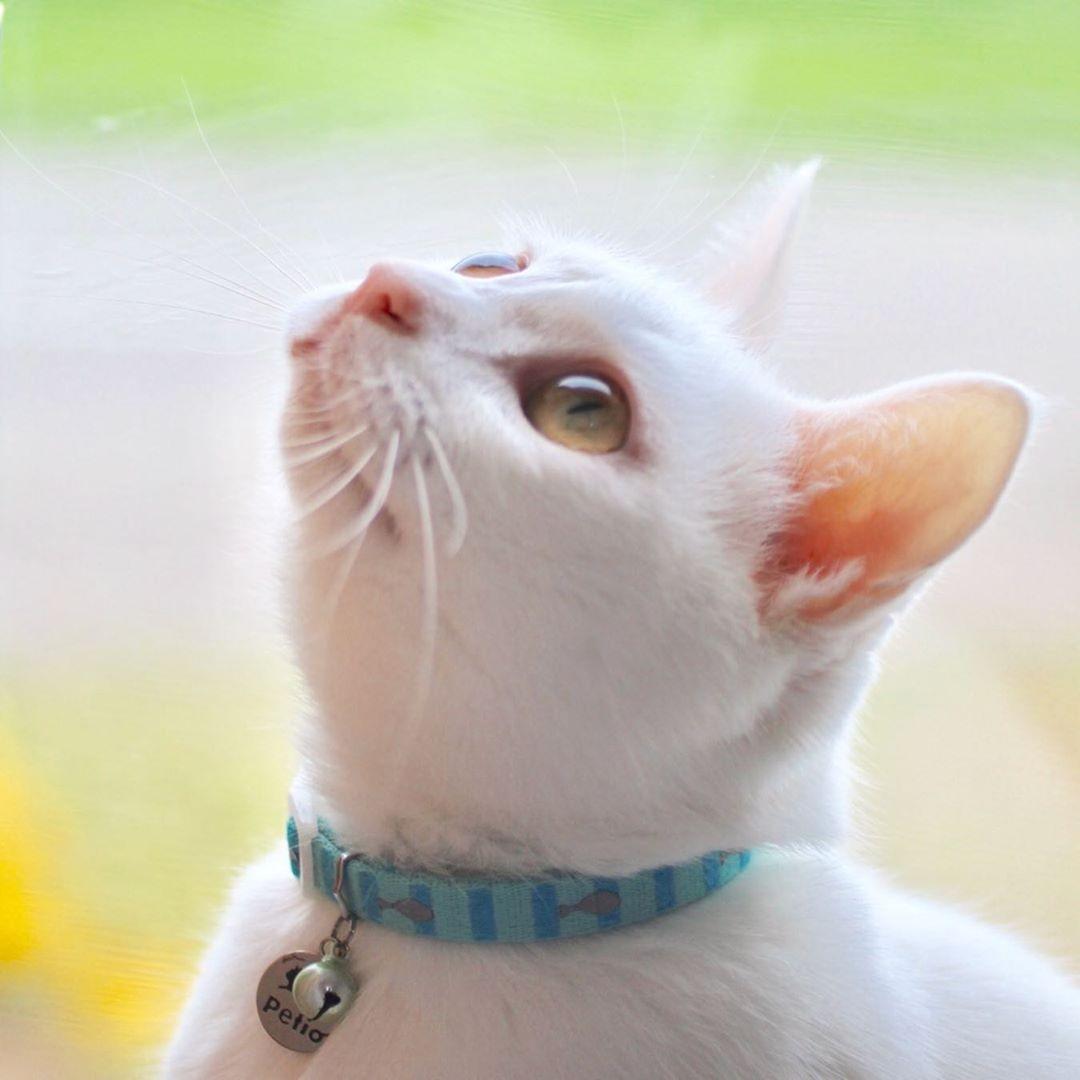 殺処分寸前だった白猫の子猫 ツイッターで情報が流れ 期限ギリギリで