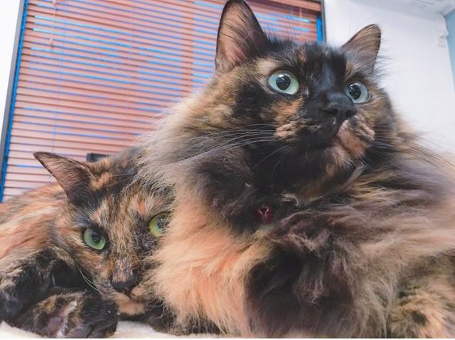 性格 サビ 猫