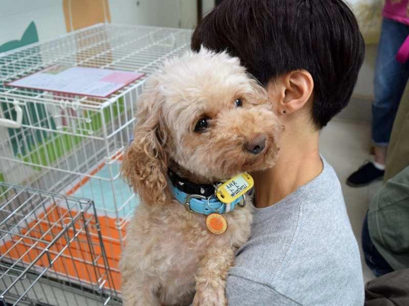 譲渡会で紹介されていた保護犬=アニマルハートレスキューで