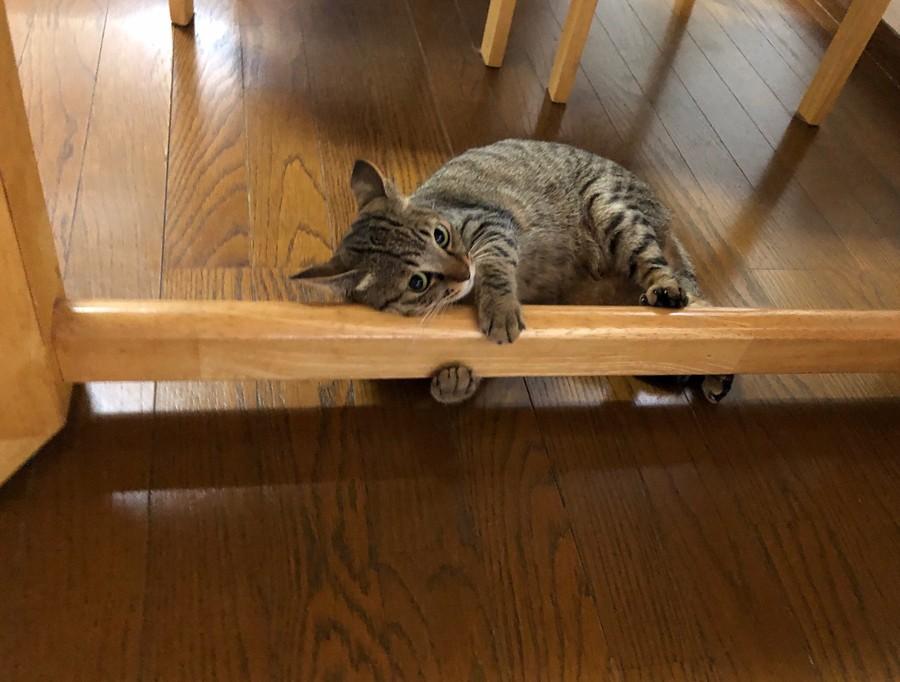 かわいいかわいい と言われて生活 ここまで変わる 目つきの鋭い元野良猫が甘えん坊なお顔に激変 まいどなニュース
