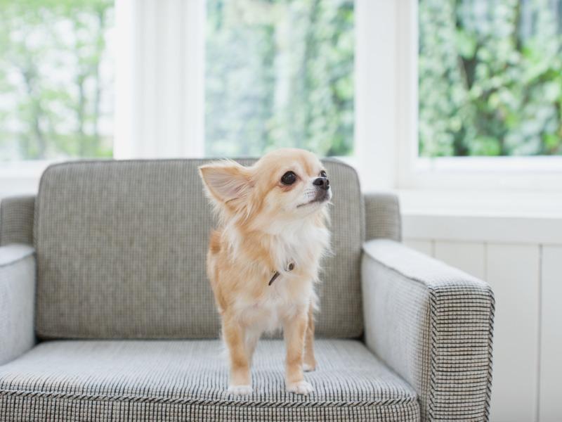 """姿勢を低くして""""犬の目線""""で家をチェック"""