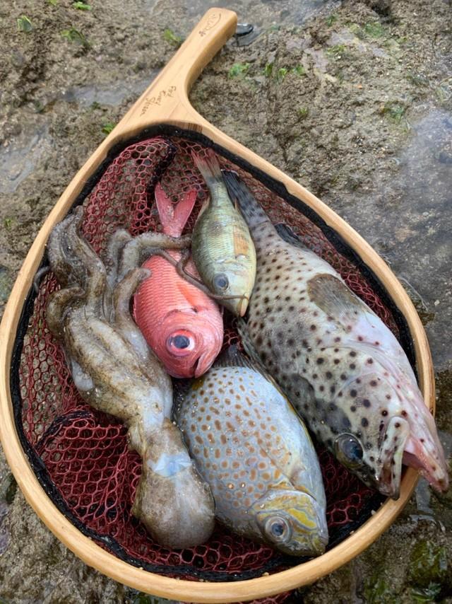 新鮮なのだがぐったり横たわる魚たち…※ムムさん提供
