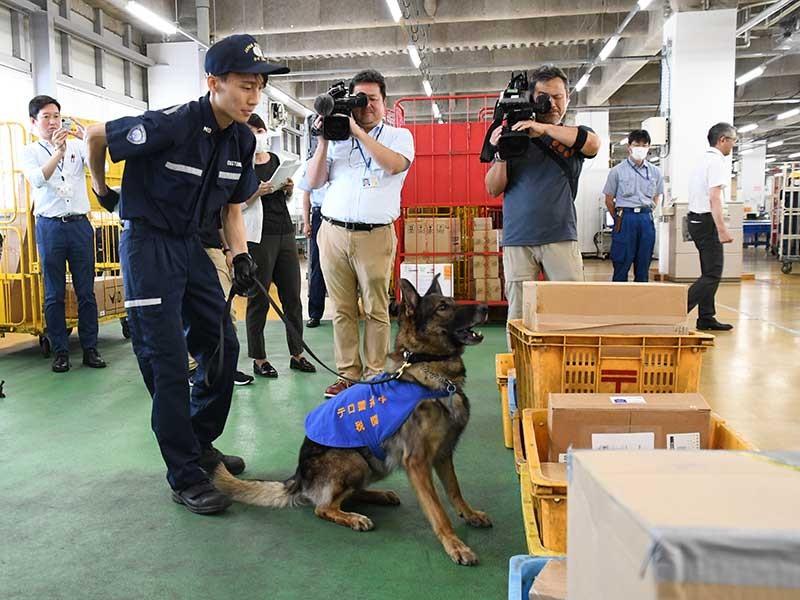火薬のにおいが漂う荷物を見つけ、座って知らせる爆発物探知犬
