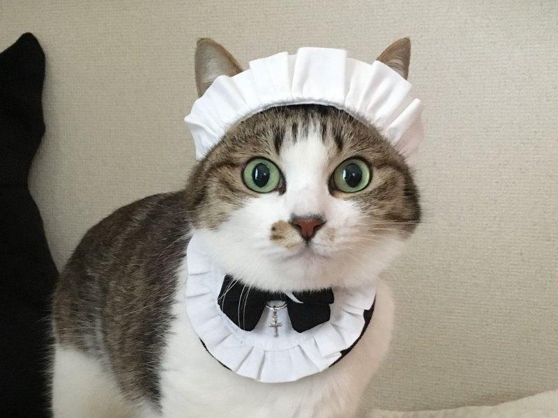 メイドさんのコスプレはいかが?