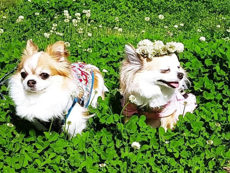 投稿コーナー「朝ワンコ・夕ニャンコ」 犬と猫の写真を大募集!