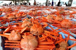香住 漁港